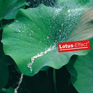 Peinture Effet Lotus